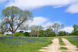 Texas bluebonnet vista along country road in spring