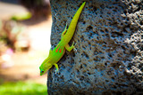 Vibrant Gecko on Stone