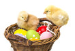 easter eggs in a basket and two newborn chickens