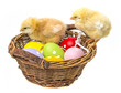 chicken and easter eggs in a basket