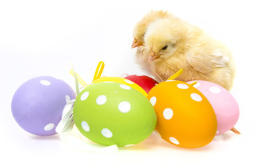 easter eggs and chickens isolated on a white background