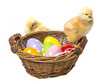 easter eggs and two chickens