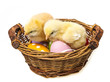 easter eggs and two newborn chickens