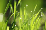 Green grass fresh Spring background