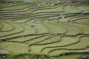 Rice terraces in Ta Phin, Sapa, Northern Vietnam
