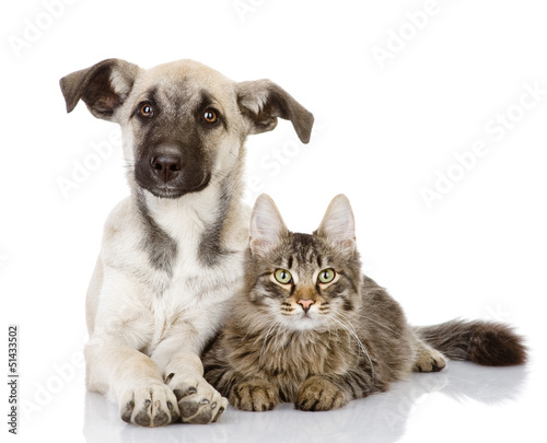dog and cat lie together. isolated on white