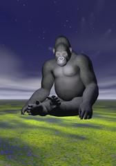 A gorilla in meditative position