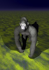 An irritated gorilla