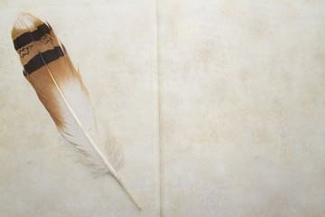 Antique book and bustard feather