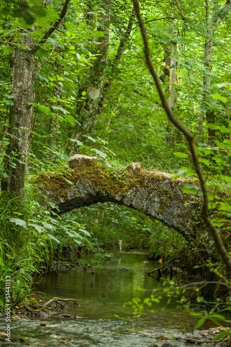 Fototapeten,wald,natur,landschaft,strömen