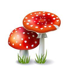 Red Mushroom Amanita