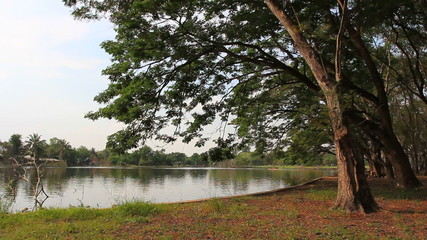 Lake view and tree