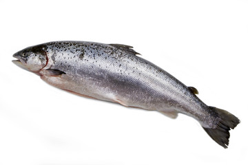 salmone norvegese isolato su sfondo bianco