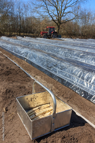 The first asparagus production of asparagus beds
