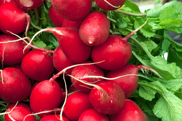fresh radish with green leaves