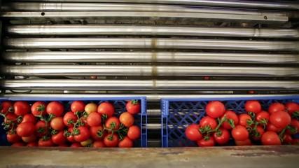 cadena limpieza tomate