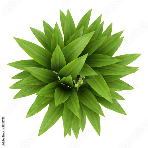 top view of bamboo plant in pot isolated on white background