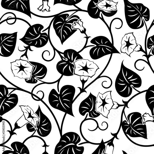 Deurstickers Bloemen zwart wit seamless morning-glory black isolated background