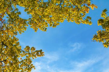Eichen im Herbst, sonniger Herbsttag