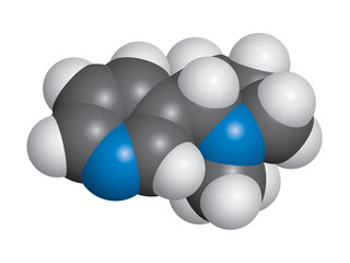 Nicotine molecule space fill model - C10H14N2