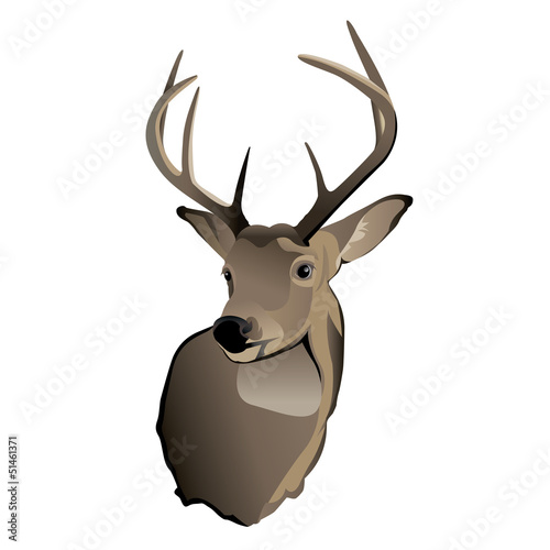 Trophy Whitetail Deer Buck