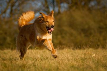 Mischlingshund in Bewegung