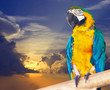 Green-winged macaw against sunset