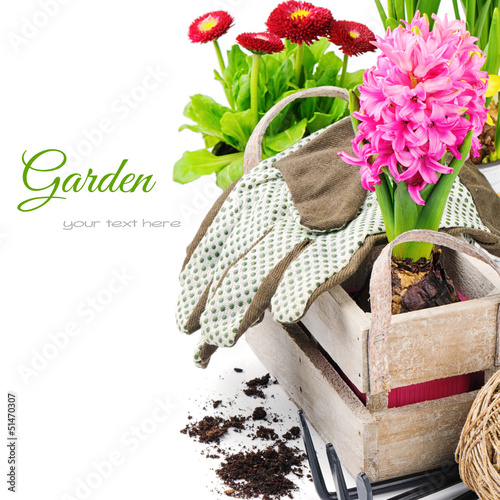 Colorful flowers and garden tools