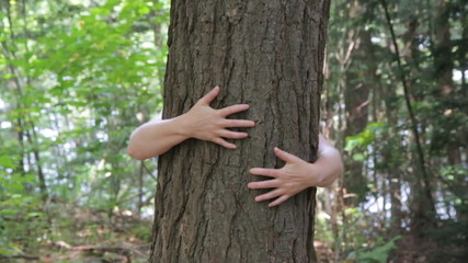 Hugging a tree. A woman puts her arms around a tree.
