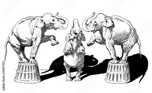 3 Circus Elephants