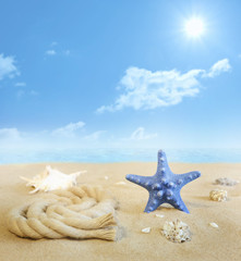 Starfish on the beach on sand with shells background concept