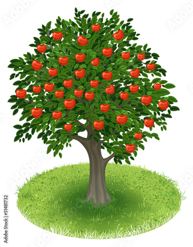 Apple Tree in green field