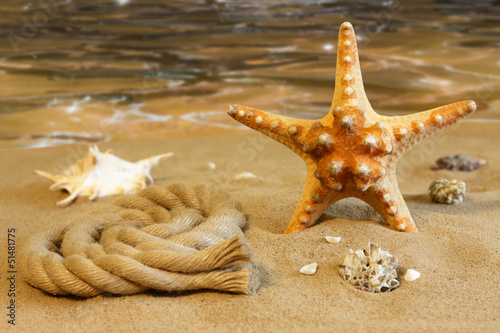 Starfish on the beach on sand with shells background concept - 51481775