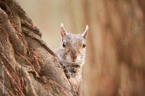 wiewiorka-na-drzewie