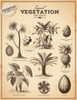 Tropical plants and exotic fruits