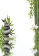 composition flore aquatique zen relaxation
