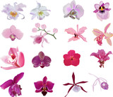 Fototapety sixteen orchids collection isolated on white