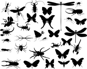 insects and spiders collection on white