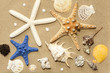 Shells and starfish on beach on sand background abstract