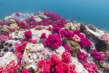 Soft coral at Lipe island