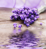 Fototapety Lavendelblüten mit Spiegelung