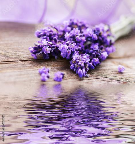 In de dag Lavendel Lavendelblüten mit Spiegelung