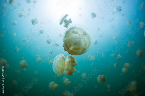 snorkeling in Jellyfish lake, Palau