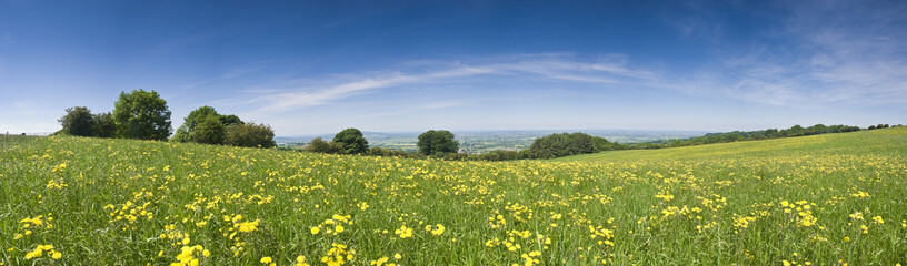 Buttercup field, rural landscape.