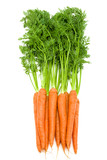 Bunch of  fresh raw carrots with green tops isolated