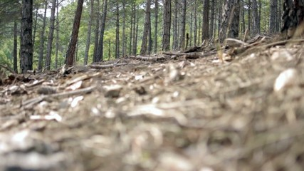 bosque desenfoque extremo hojas y ramas con pinos