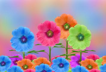 Beautiful Hollyhock flower