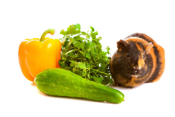 guinea pig about vegetables, isolated