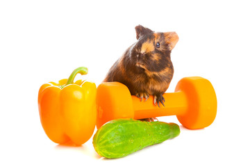guinea pig about vegetables and a dumbbell , isolated