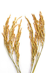 Wheat isolated on white background